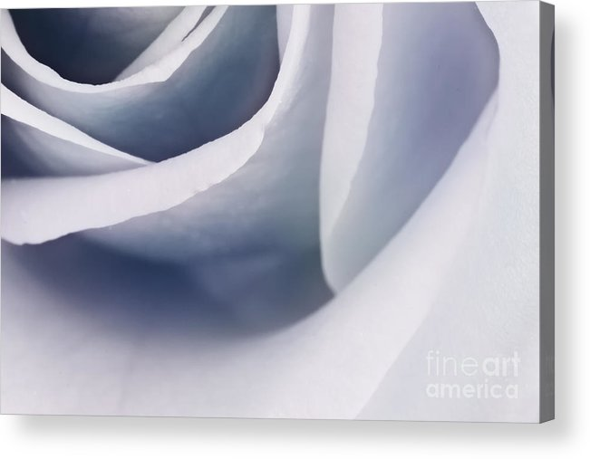 Abstract Acrylic Print featuring the photograph Rose Macro by Mythja Photography