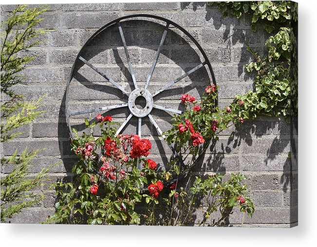 Rose Acrylic Print featuring the photograph Rosewheel by Dennis Ward