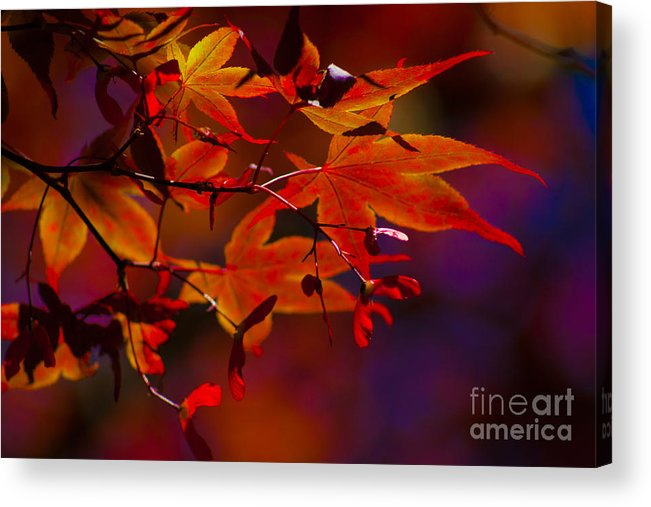 Leaves Acrylic Print featuring the photograph Royal Autumn A by Jennifer Apffel
