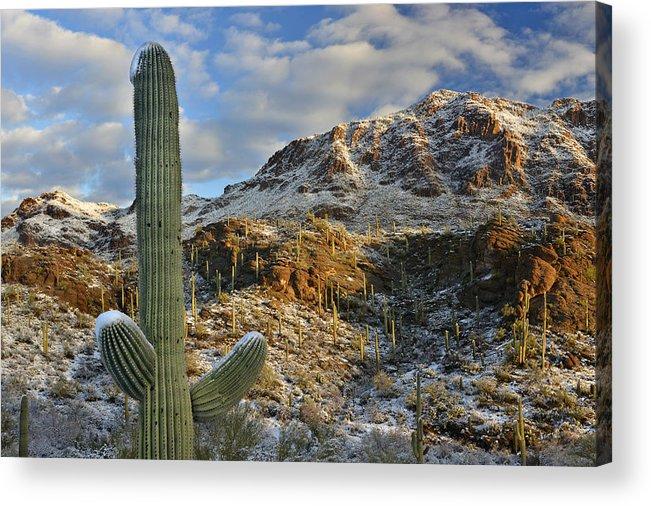 Saguaro National Park Acrylic Print featuring the photograph Saguaro National Park Winter Morning by Dean Hueber