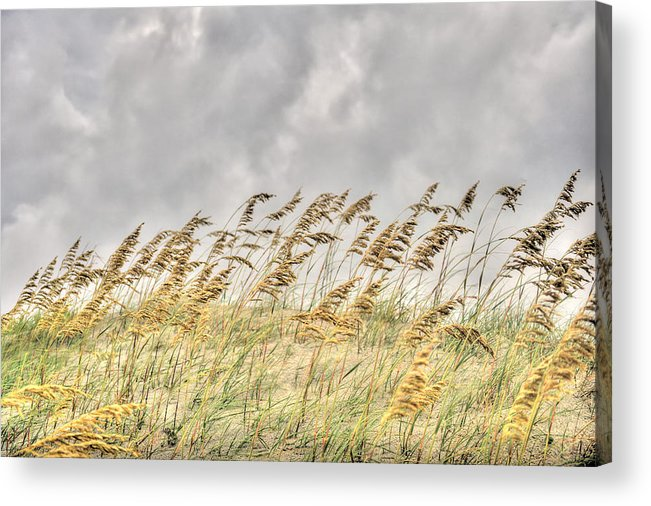 Sea Oat Acrylic Print featuring the photograph Bend Don't Break by Don Mennig