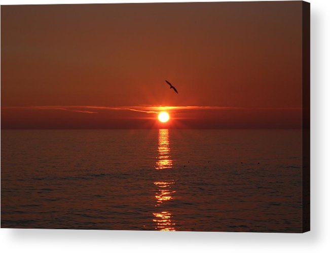 Sky Acrylic Print featuring the photograph Seagull by Cath Dupuy