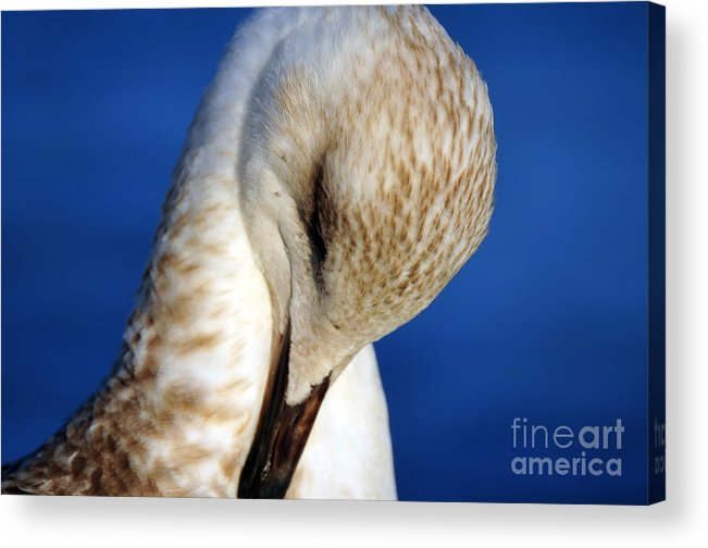 Seascape Acrylic Print featuring the photograph Seagull Portrait by Randi Grace Nilsberg