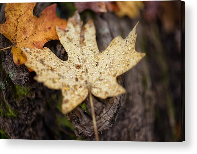Autumn Acrylic Print featuring the photograph Sedona Leaf 12 by Marianne Donahoe