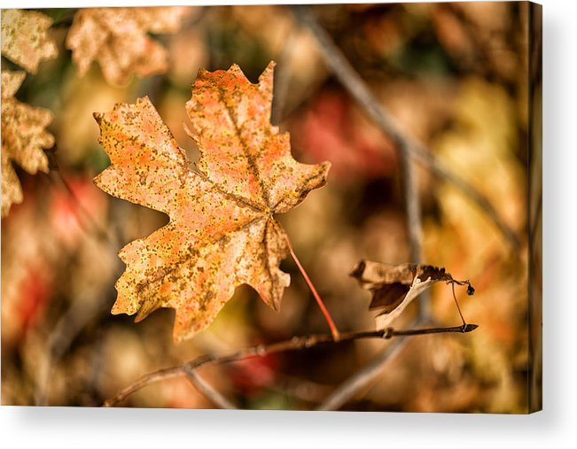 Autumn Acrylic Print featuring the photograph Sedona Leaf 14 by Marianne Donahoe