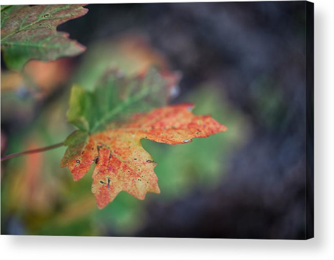 Autumn Acrylic Print featuring the photograph Sedona Leaf 20 by Marianne Donahoe