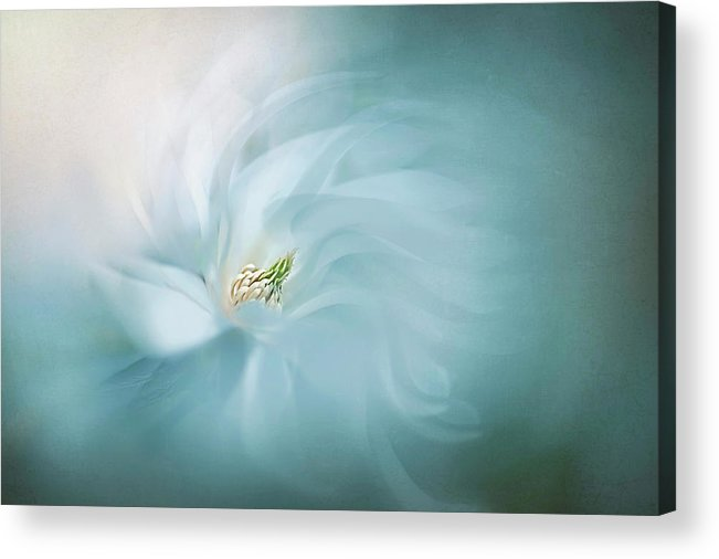 Macro Acrylic Print featuring the photograph Serene by Jacky Parker