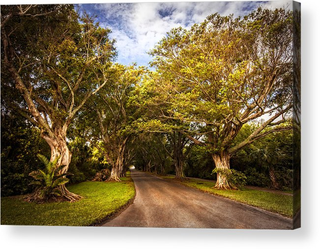Clouds Acrylic Print featuring the photograph Shady Lane by Debra and Dave Vanderlaan