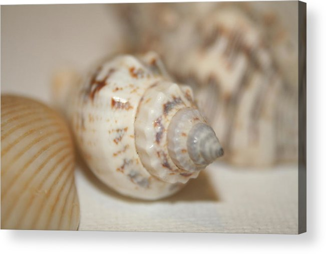 Sea Shells Acrylic Print featuring the photograph Shells by Rob Cruise