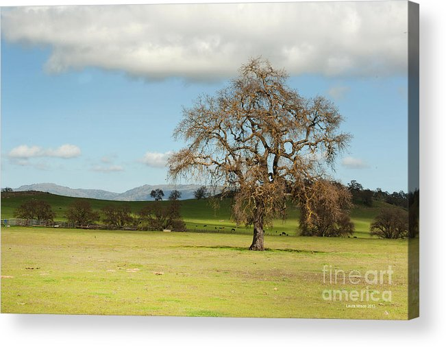 Landscape Photography Acrylic Print featuring the photograph Silicon Valley Hills by Artist and Photographer Laura Wrede