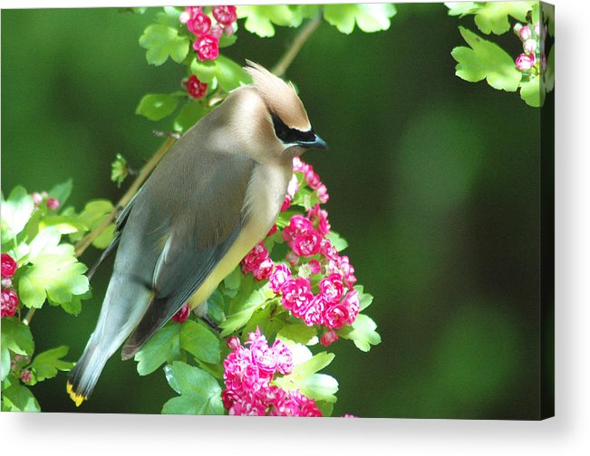 Birds Acrylic Print featuring the photograph Sittin' Pretty by Annie Pflueger