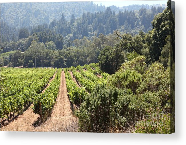 Vineyard Acrylic Print featuring the photograph Sonoma Vineyards In The Sonoma California Wine Country 5d24518 by Wingsdomain Art and Photography