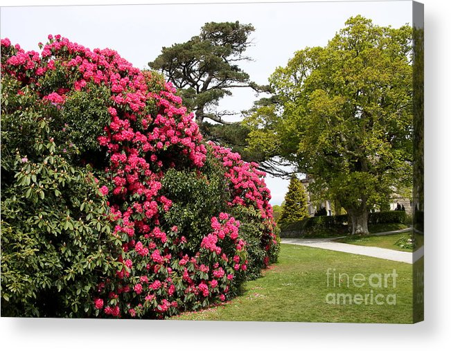 Muckross Garden Acrylic Print featuring the photograph Spring In Muckross Garden - Ireland by Christiane Schulze Art And Photography