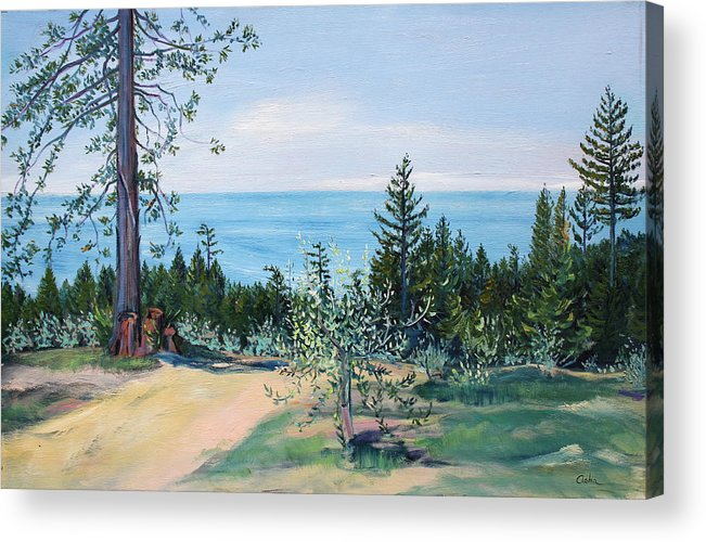 Coastal Landscape Painting Acrylic Print featuring the painting Spring Olive Grove And Pathway To The Sea by Asha Carolyn Young