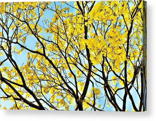 Spring Acrylic Print featuring the photograph Spring Time by Christopher Hoffman