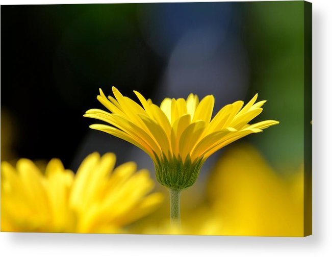 Standing Above The Rest Acrylic Print featuring the photograph Standing Above The Rest by Maria Urso