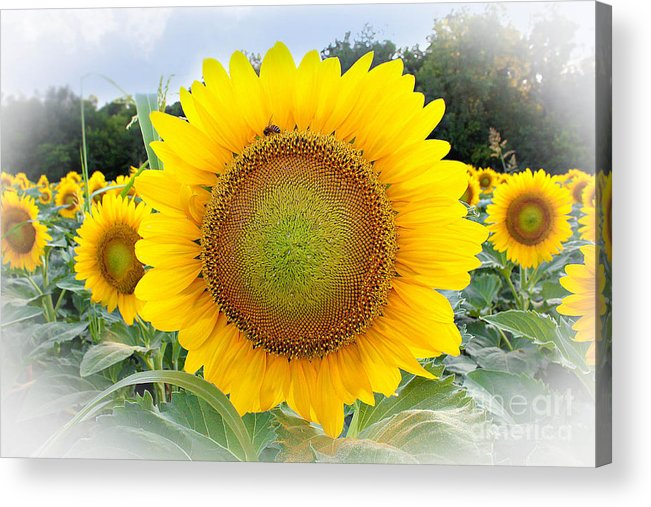 Oklahoma Print Acrylic Print featuring the photograph Standing At Attention by Sue Huffer