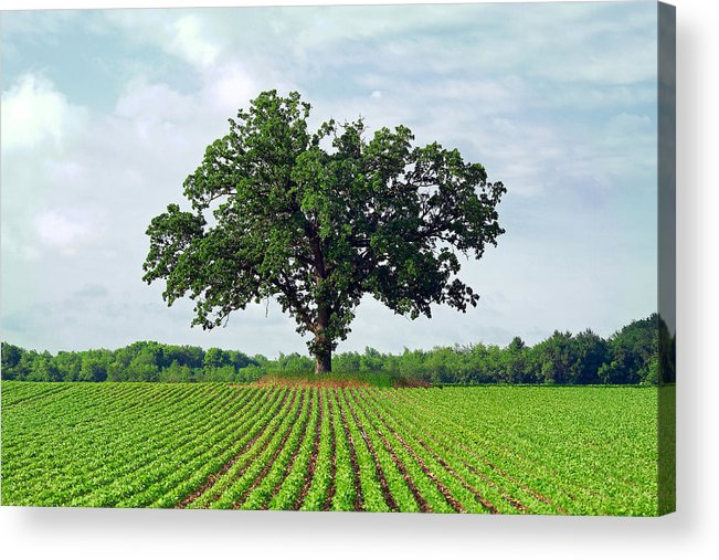 Big Acrylic Print featuring the photograph Standing Guard by Todd Klassy