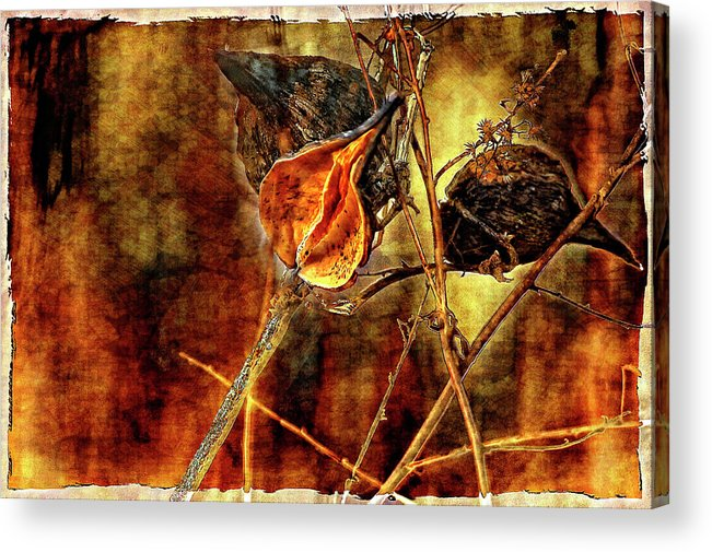 Weeds Acrylic Print featuring the photograph Still Life Study II by Steve Harrington