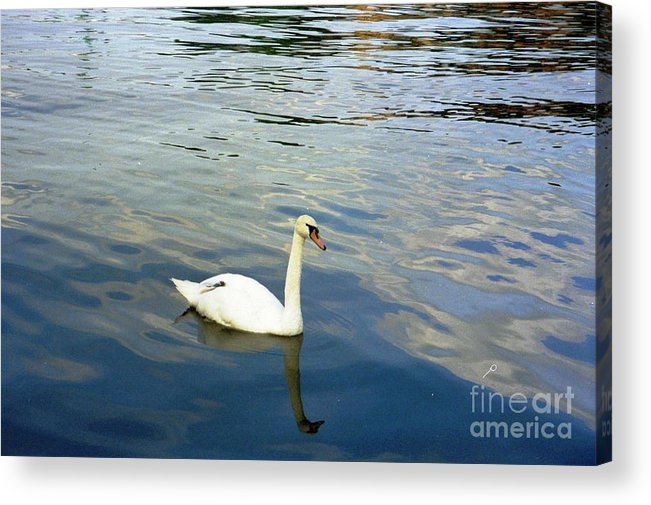 Sweden Acrylic Print featuring the photograph Stockholm City Harbor Swan by Ted Pollard