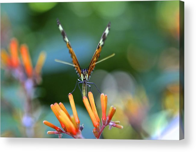 Flower Acrylic Print featuring the photograph Strike A Pose by Sophal Benefield
