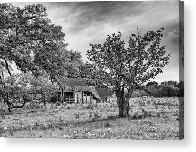 Smithville Acrylic Print featuring the photograph Study Of Rural Life In Smithville Texas by Silvio Ligutti