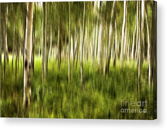 Aspen Acrylic Print featuring the photograph Summer Aspens by Scott Pellegrin
