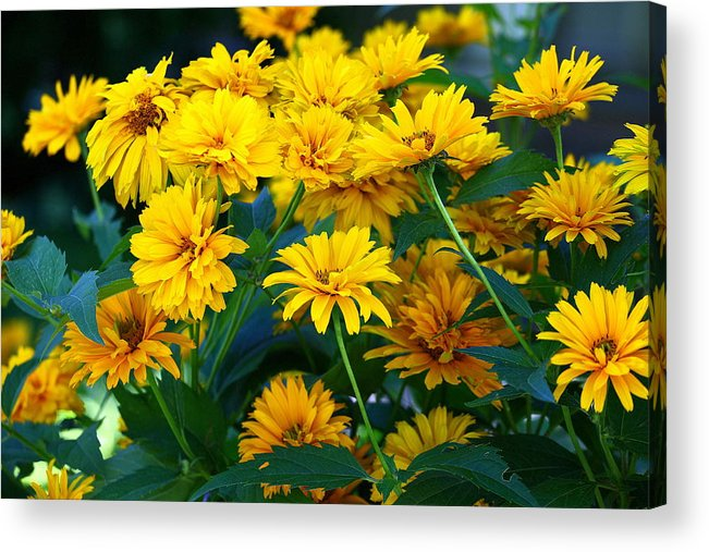 Flowers Acrylic Print featuring the photograph Summer Bouquet by Linda Edgecomb