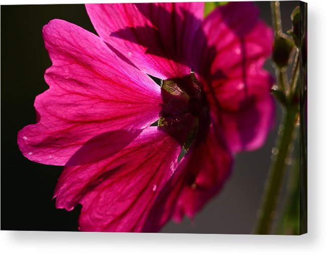 Nature Acrylic Print featuring the photograph Summer Impressions by Heike Hultsch