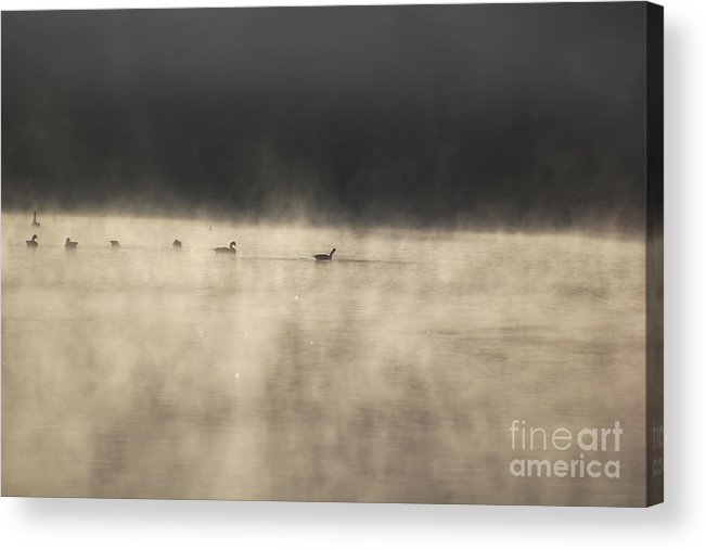 Lake Photographs Acrylic Print featuring the photograph Sunrise Geese by Melissa Petrey
