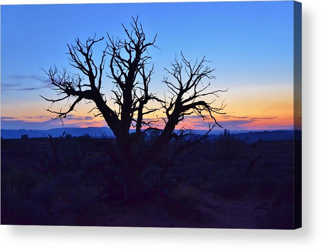 Sunset Acrylic Print featuring the photograph Sunset With Tree Silhouette by David Knowles