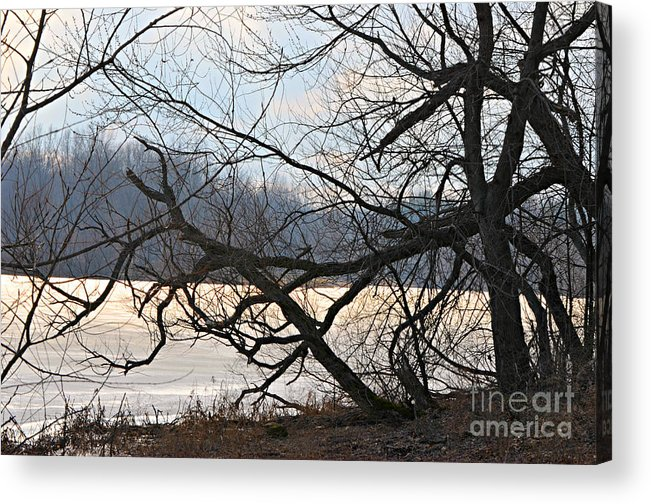 Tangled Branches Print Acrylic Print featuring the photograph Tangled Branches by Lila Fisher-Wenzel