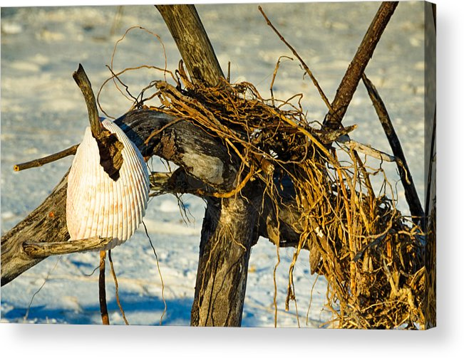 Driftwood Acrylic Print featuring the photograph Tangled Driftwood by Georgette Grossman