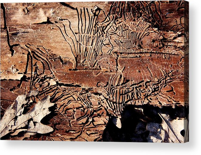 Termites Acrylic Print featuring the photograph Termite Trails by Kevin Grant