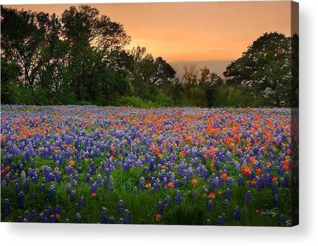 Bluebonnets Acrylic Print featuring the photograph Texas Sunset - Bluebonnet Landscape Wildflowers by Jon Holiday