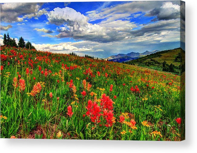 Wildflowers Acrylic Print featuring the photograph The Art Of Wildflowers by Scott Mahon