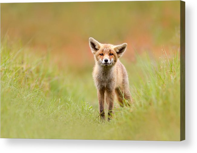 Camouflage Acrylic Print featuring the photograph The Funny Fox Kit by Roeselien Raimond