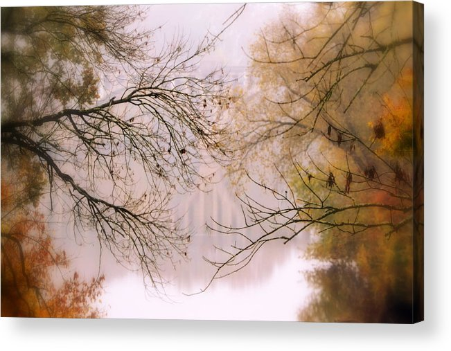 Tree Acrylic Print featuring the photograph The Meeting by Michelle Ayn Potter