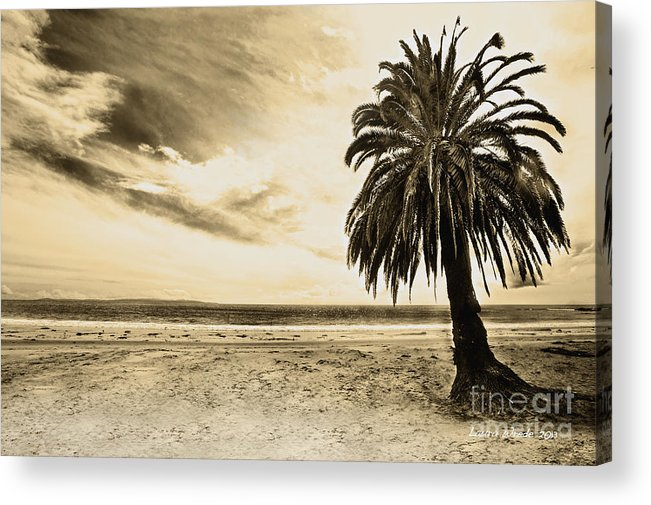Gaviota Acrylic Print featuring the photograph The Palm Swayed As The Storm On The Ocean Blew In by Artist and Photographer Laura Wrede