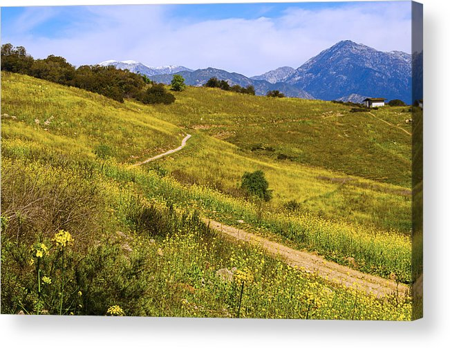 Weeds.grass Acrylic Print featuring the photograph The Road Home by Camille Lopez