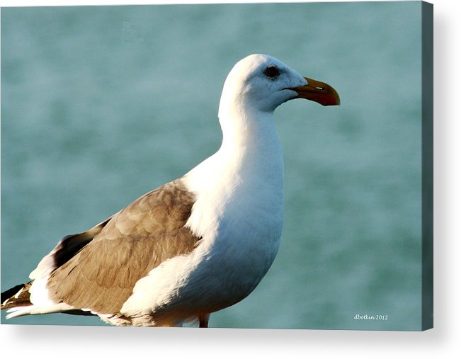 Animals Acrylic Print featuring the photograph The Sun On My Back by Dick Botkin