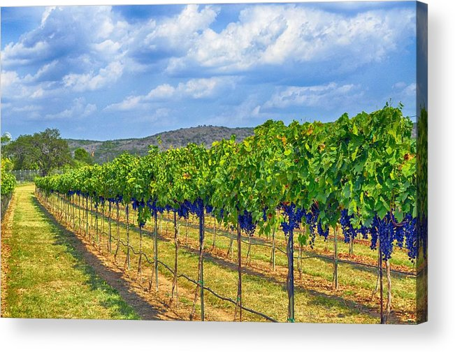 Wine Country Acrylic Print featuring the photograph The Vineyard In Color by Kristina Deane