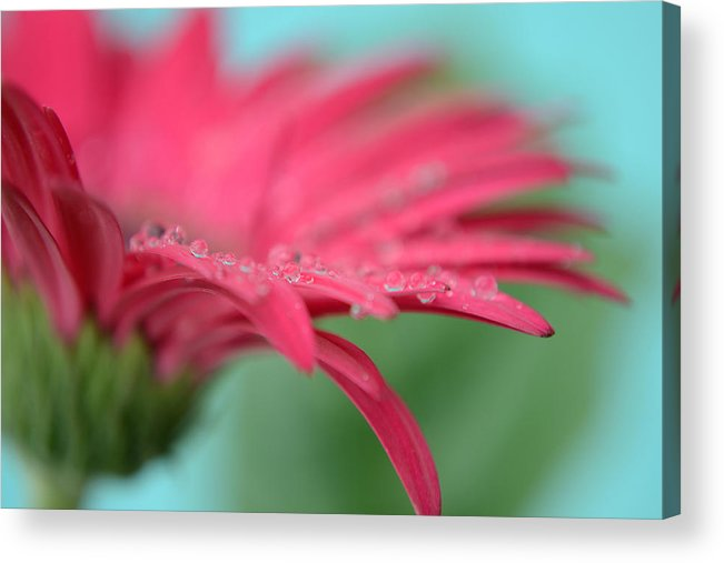 Flower Acrylic Print featuring the photograph The Wings Of Time by Melanie Moraga