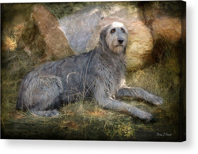 Dogs Acrylic Print featuring the photograph The Wolfhound by Fran J Scott