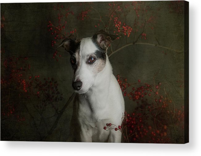 Dog Acrylic Print featuring the photograph The Woods Are Lovely, Dark And Deep..... by Heike Willers