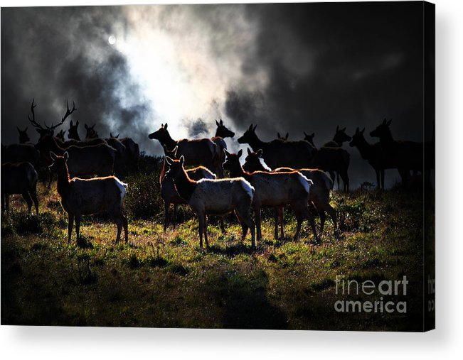 Bayarea Acrylic Print featuring the photograph Tomales Bay Harem Under The Midnight Moon - 7d21241 by Wingsdomain Art and Photography