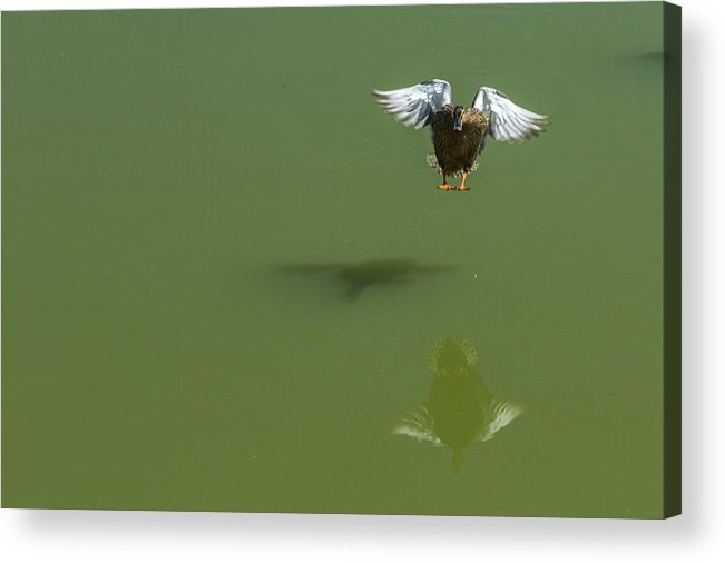 2014 Acrylic Print featuring the photograph Touch Down by Terry Thomas