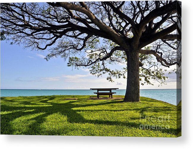 Ocean Acrylic Print featuring the photograph Tree Canopy by Gina Savage