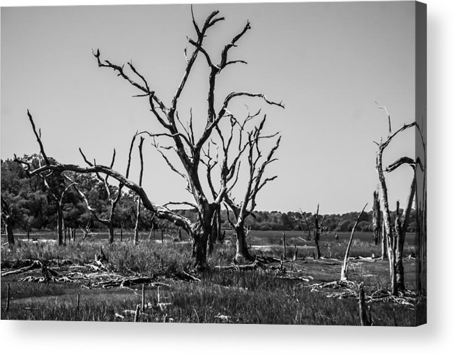 Tree Acrylic Print featuring the photograph Tree Graveyard by Steven Taylor