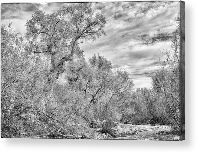 Black And White Acrylic Print featuring the photograph Trees And Clouds by Mark Bertoldi